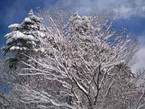 スノーボードに行く2012 -だいせんホワイトリゾート-